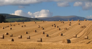 article_codev-2016-08-29-5342fe8e0b-Round_straw_bales_in_a_field